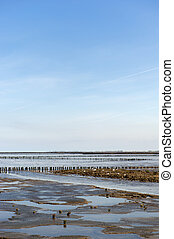 Mudflat during ebb in Dutch water landscape