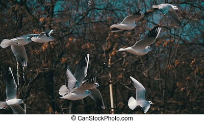 Seagulls Hover in the Air and Catch Food. Slow Motion in 96...