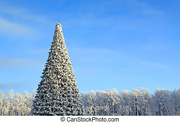 fir tree in park