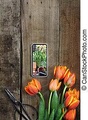Gardening Photo and Tulips