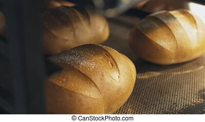Production of the bread at the factory. Loaves of fresh...