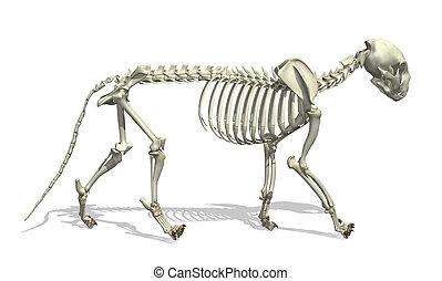 Cat Skeleton - 3D render of a cat skeleton.