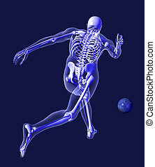 X-ray Skeleton - Bowling from Behind