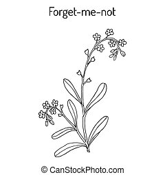 Forget-me-not. Hand drawn illustration - Forget-me-not...