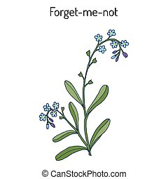 Forget-me-not Myosotis arvensis . Hand drawn botanical...