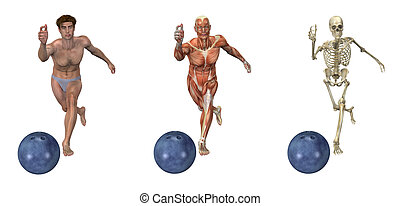 Anatomical Overlays - Bowling - Anatomical overlays...