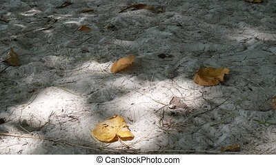 Tree shadow on beach sand.