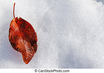 red fallen leaf - The old red fallen leaf on snow