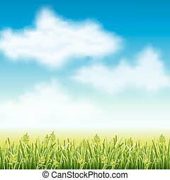Summer field of grass - Vector illustration of summer fields...
