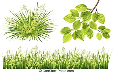 Summer grass and leaves - Vector collection of green grass...