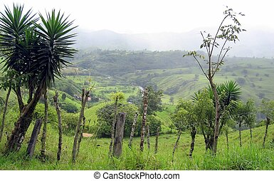 Nature flora and fauna of Costa Rica