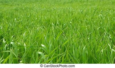 Grass green closeup