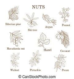 diferente, ramas, nuez, Colección