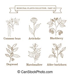 Vintage collection of hand drawn medical herbs and plants,...