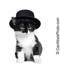 Little cat wearing black felt hat