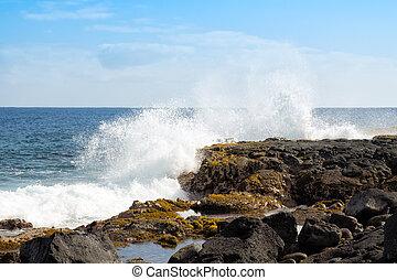 Seaweed grows in splash fed tidal pool - Rhodophyta and...
