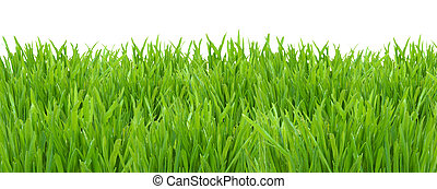 Green grass lawn isolated on white background