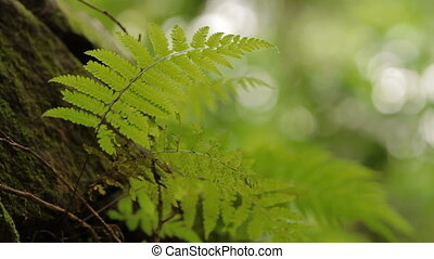 Natural background with green fern.