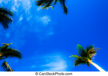 Abstract Tropical Sky View