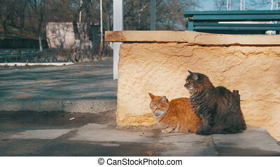 Two Gray and Red Homeless Cats on the Street in Early Spring