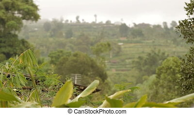 Terrace farming. Rice fields on Bali. Winter rainy season....