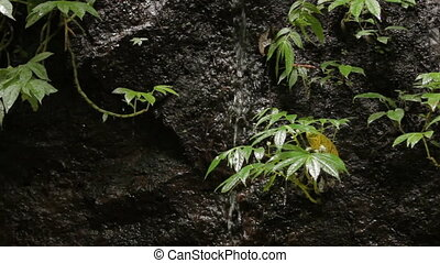 Water flows over the rocks between plants. Natural...