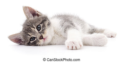 Kitten on white background. - Small gray kitten isolated on...