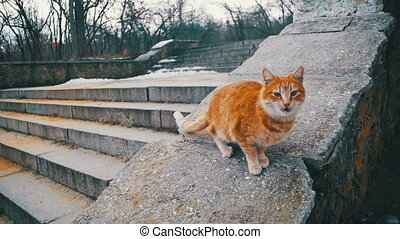 Homeless Red Cats on the Street Park in Early Spring. Funny...