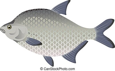 Bream vector cartoon illustration