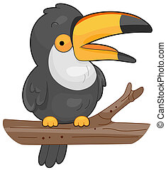 Toucan - A Colorful Toucan Perched on a Branch