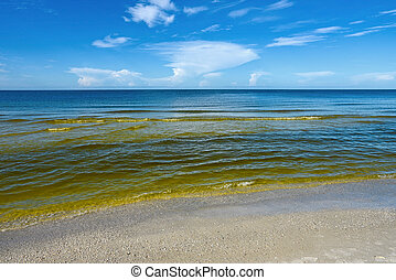 Red Tide - Visible Red tide in the Gulf of Mexico is a...