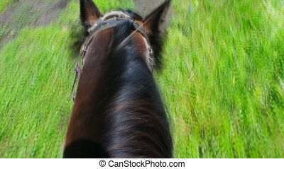 along path on a horse ride in a forest. horse runs on road...