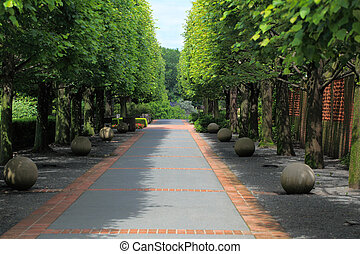 Tree Lined Pathway - Two row tree lined pathway in the park