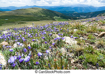 Colorado Rocky Mountain Landscape with Spring Wildflowers