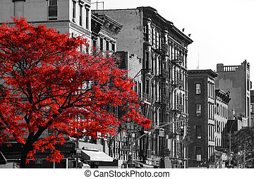 Red Tree on Black and White New York City Street
