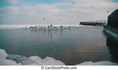 Group of Seagulls in Winter Ice-Covered Sea. Slow Motion in...