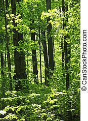 primavera, verde, bosque