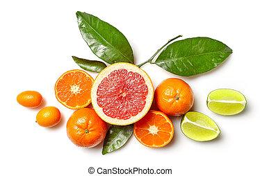 various citrus fruits - composition of various citrus fruits...