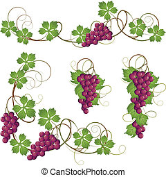 Vine - A set of elements from the vine for decoration