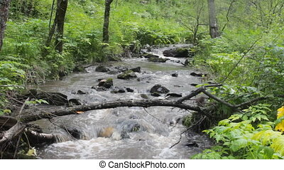 mountain river flows in forest under a bias - river flows in...