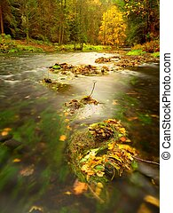 Colorful autumn leaves on boulder in fall mountain stream.