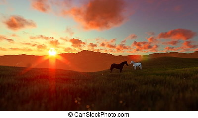 Two horses on green meadow, beautiful sunset