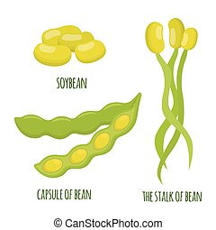Soybean set. Beans, capsule of soya, stalks. Vegetarian healthy food.