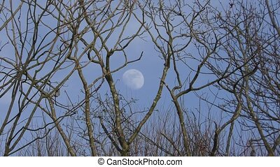 Full moon in the sky. Moon among the branches of trees. Daytime.