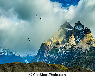 Flock of Andean condors flying - Travel in Chile. National...