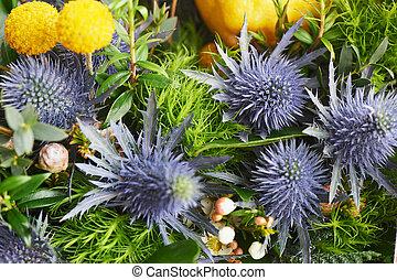 Blue thorn Eryngium Alpi in nature. Close. - Blue thorn...