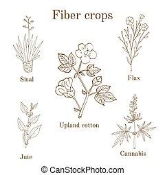 Fiber crops - cotton, sisal, flax, jute, cannabis Hand drawn...