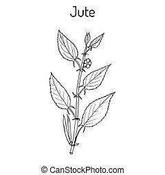 Fiber crop jute Corchorus olitorius , or Nalta-jute,...