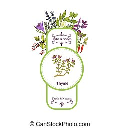 Vintage herbs and spices label collection. Thyme hand drawn...
