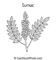 Sicilian sumac Rhus glabra branch with leaves and berries